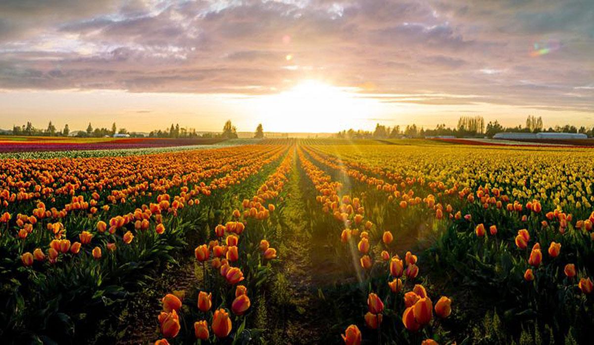 Tulip INN - Welcome to Mount Vernon, WA